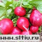 В Воронежской области появилась органическая еда на законном основании